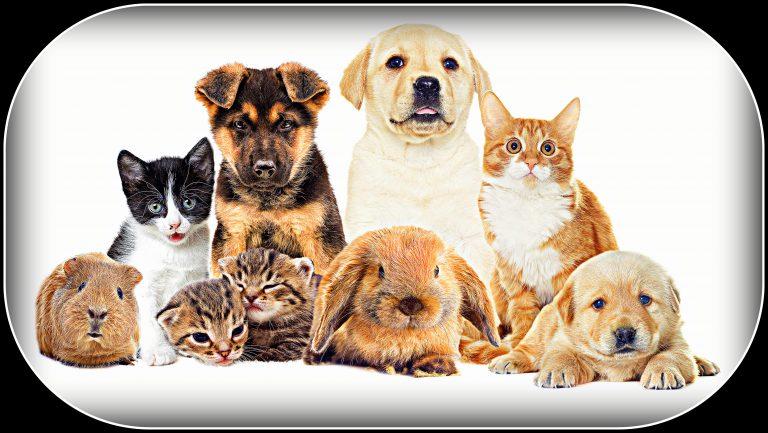 Little Pets