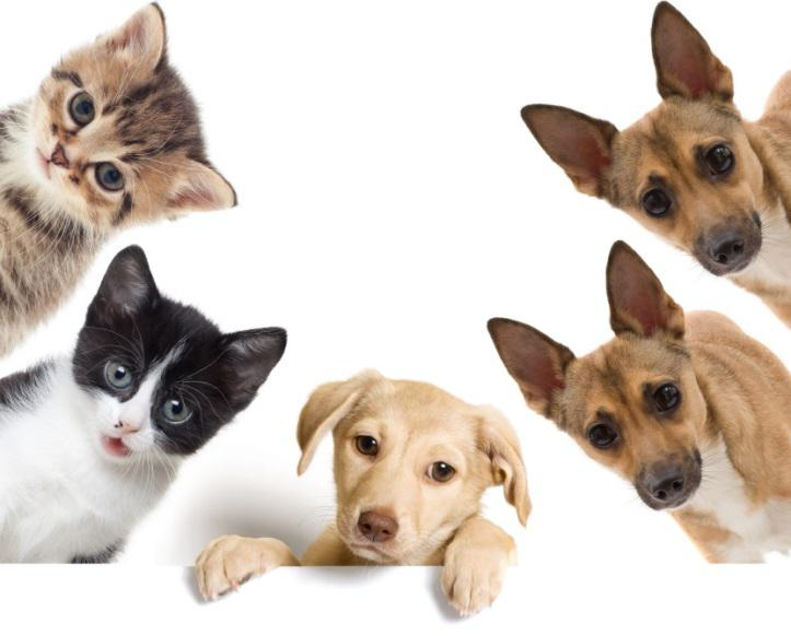 5 Factors To Consider When Selecting The Best Veterinarian